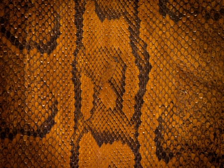 snakeskin: Snake leather background with vignette