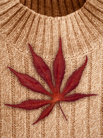 Autumn concept with sweater and red leaf photo