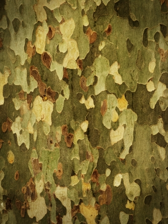 Camouflage background from tree bark with dark vignette photo