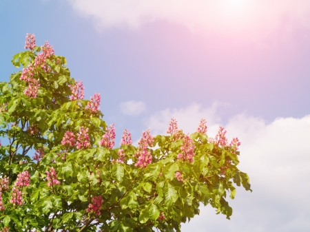 Beautiful spring tree against cloudy sky with sun Stock Photo - 15353972