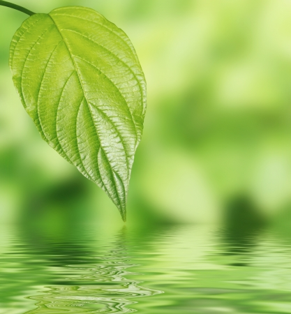 Green leaf over water spa setting photo