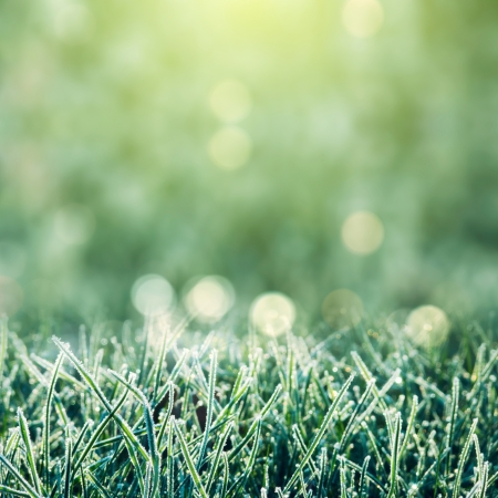 Morning dew background with frost grass on bokeh light photo