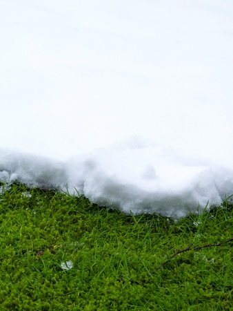 Layer of snow on grass, like a carpet photo