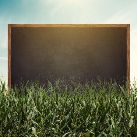 Blank black chalkboard in cornfield with sunlight photo