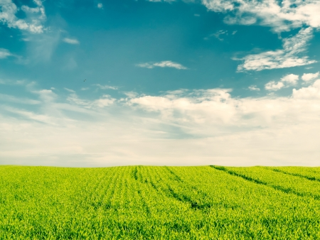 Beautiful crop field on blue cloudy sky photo