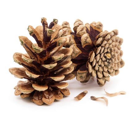 Pine cones isolated on white photo