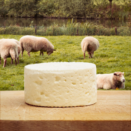 Sheep cheese on wooden board with animals photo