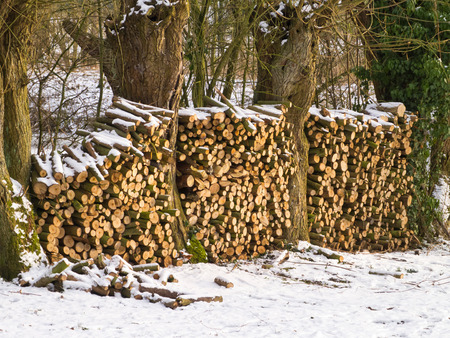 Wood logs stack stored during winter photo