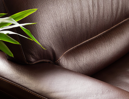 green sofa: Dark leather sofa with plant Stock Photo