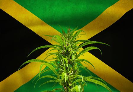 jamaican: Hennep plant on jamaican flag