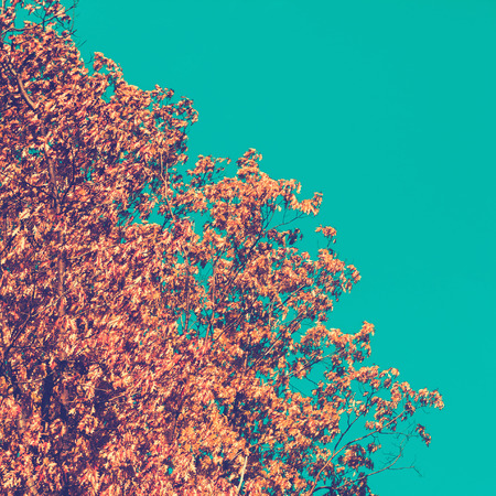 blue toned: Oak tree on clear blue sky, retro toned