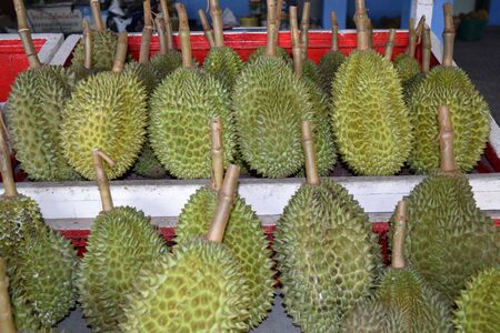 Durian on the table;Durian on shelves;Durian at market Stock Photo