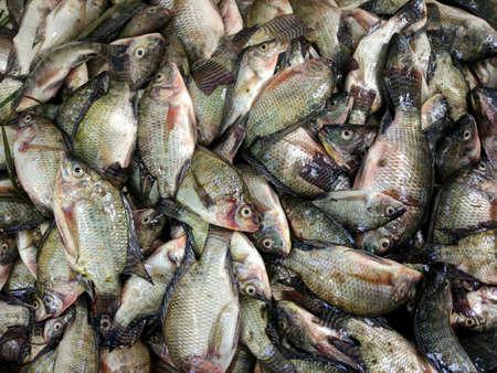 photo stack of fresh fish Archivio Fotografico