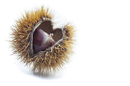 macro of a fresh chestnut
