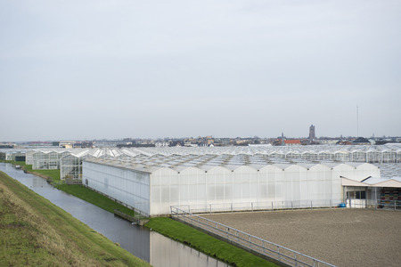 westland: Greenhouses in het Westland in s-Gravenzande, a village. On the background is visible the church of Monster, also a small village in het Westland Stock Photo