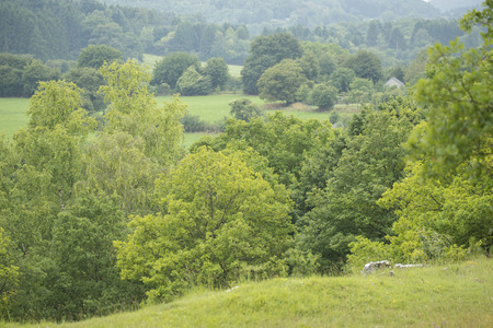 wallonie: Overview of Trees in a Hill Country in Nismes, a small village in  Viroinval, Namen, Belgium