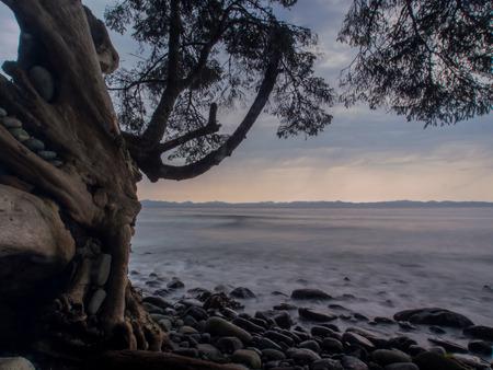 cloud drift: Driftwood on the beach Stock Photo