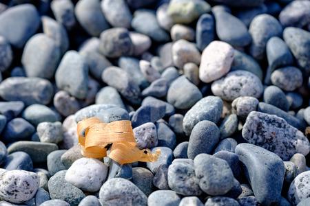 cedar shaving on the beach