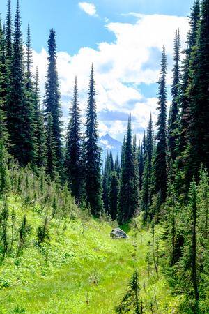 Trees in grassy alpine valley Stok Fotoğraf