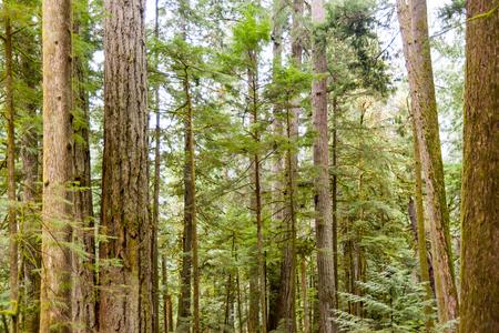 West coast forest Stock Photo