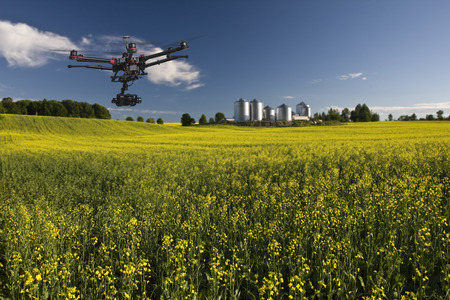 drone: Canola field with farm structures on a background highlighted by a sunset