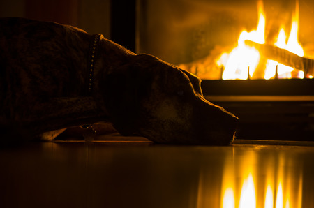 A brindle Great Dane is laying on a floor next to a fire place. The dog is highlighted by the warm light of the flame. Standard-Bild
