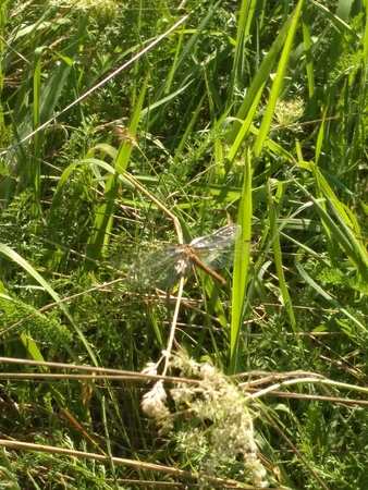 Beautiful exquisite dragonfly with transparent wings on the background of lively bright steppe grass. A wonderful image for your design. A picturesque photo of an insect.