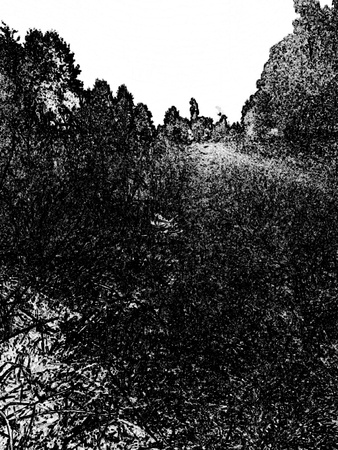 Black and white photo sketch of the forest landscape