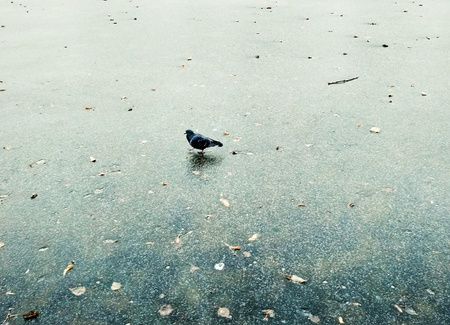 A lone pigeon strolls across a frozen lake. Winter in Moscow. Moody Minimalistic Photo Banque d'images - 112860930