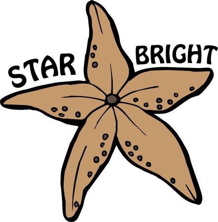 seastar: There are stars in the sky and stars in the sea - like this beautiful star.  These sea stars are stunning on bath d?cor. Illustration