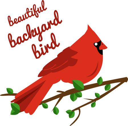 recognized: This lovely cardinal is perhaps the most recognized bird.