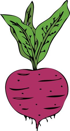 vegetarians: Cooks and vegetarians will like this sweet beet. Illustration