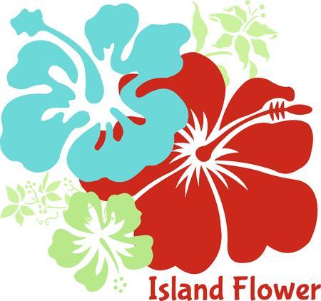azal�e: Hibiscus color�s hawa�ennes sont toujours un excellent choix pour l'ajout d'un accent floral. Grande ambiance tropicale trop Illustration