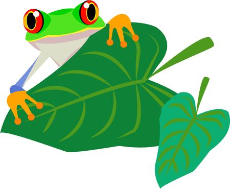 glimpse: Look closely behind this big leaf and catch a glimpse of a our big eyed frog  Bring him along onto your projects to encourage a green lifestyle.