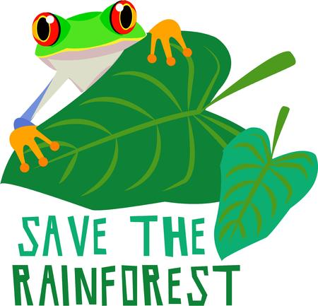 eyed: Look closely behind this big leaf and catch a glimpse of a our big eyed frog  Bring him along onto your projects to encourage a green lifestyle.