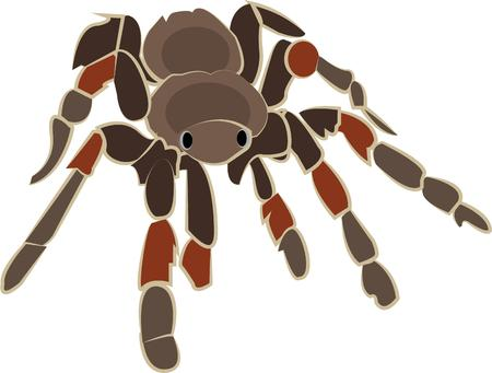 terrarium: This scary spider is an unexpected pet.  This king of the terrarium can add a touch of the wild to your creations. Illustration