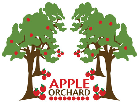 orchard fruit: Lovely apples growing in a row  Dont just decorate with an apple but add an entire orchard of apples