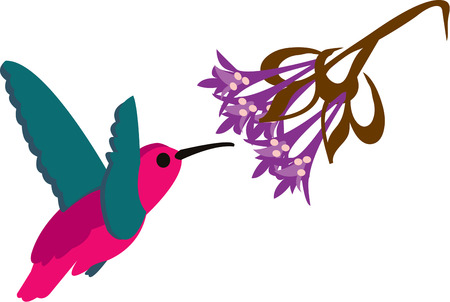 nectars: Few things are more delicate and lovely than a hummingbird.  This beautiful bird feeding on lacy blooms is always a good choice for ladies shirts or bag decoration.