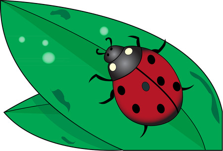 closely: Look closely and you will find a cute little lady bug on this leaf.  Add this cute guy to a shirt to celebrate the beauty of nature.