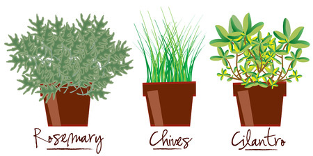chives: Lovely little pots of herbs make any kitchen complete. They are also a great decoration for your kitchen gear or even an apron Illustration