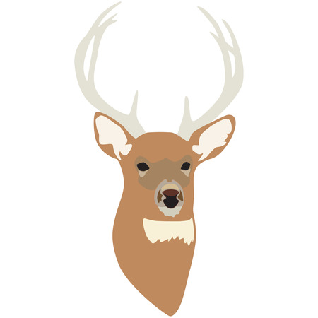 buck: This perfect buck is a hunters prize.  Add him to hunting coats or gun cases for your favorite sportsman.