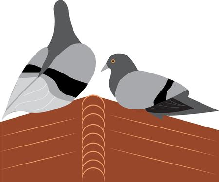 carrier pigeons: Graceful pigeons