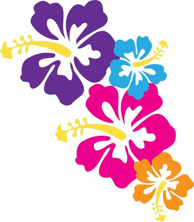hawaiian lei: Tropical hibiscus  Illustration