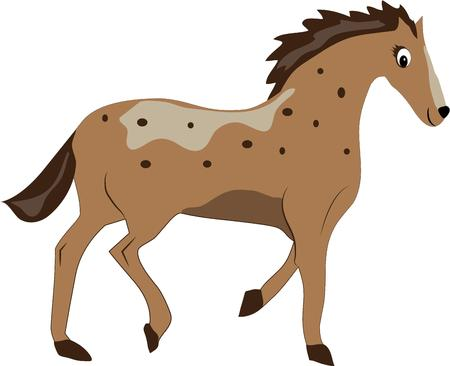 spotted: A spotted pony  Illustration