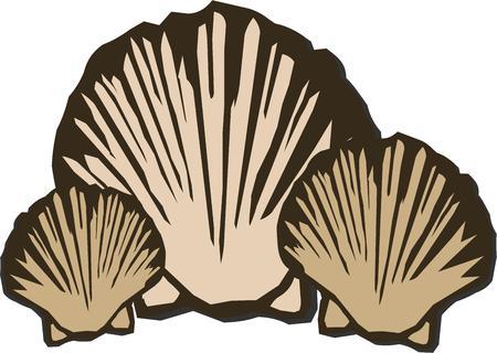 대양의: For the ultimate in oceanic decoration these shells are a must.  With their simple lined elegance they turn your projects into masterpieces.