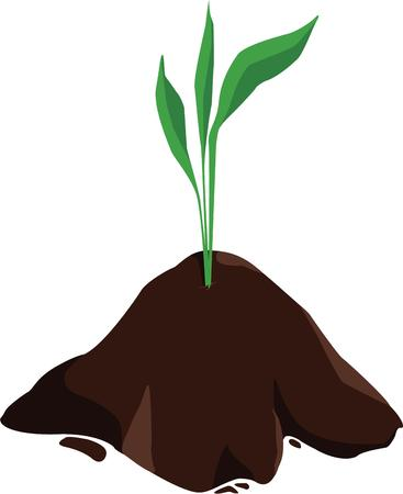 mighty: Even the mighty oak began with a small sprout.  Start something big with this growing plant.
