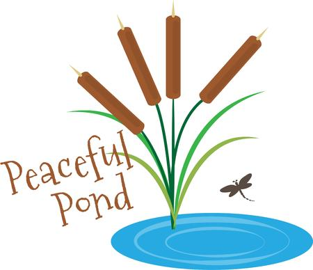 bulrush: A tranquil pond with cattails and a dragonfly.  What a lovely place for a relaxing afternoon.