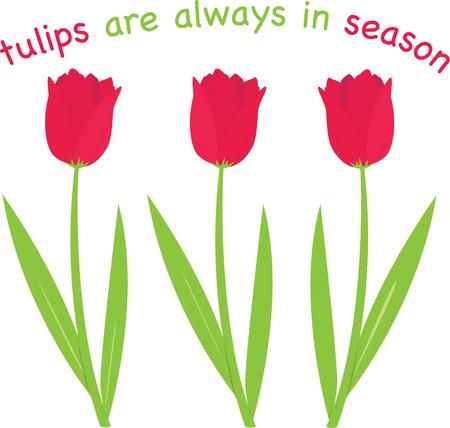 enhance: Beautiful tulips will enhance any project.