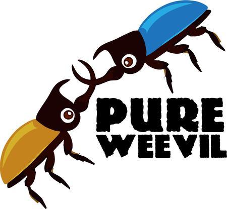 scarabeo: Gli amanti di bug apprezzeranno questi due insetti nocivi che infestano. Vettoriali