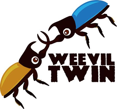 boll: Bug lovers will like these two boll weevils.